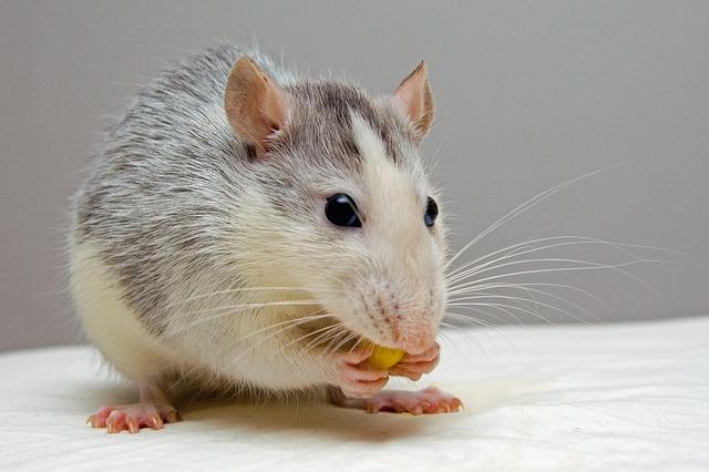 Pet 4
